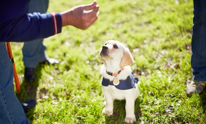 Six Weeks of Puppy Manners Classes at Family Dog Training Center (Up to 38% Off)