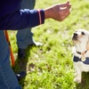 Up to 40% Off Dog Training at Family Dog Training Center