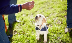 Standing OBEYtion AZ Dog Training: $125 for a Puppy Basics and Socialization Course at Standing OBEYtion AZ Dog Training ($250 Value)