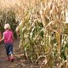 Half Off Corn Maze at Lee Farms