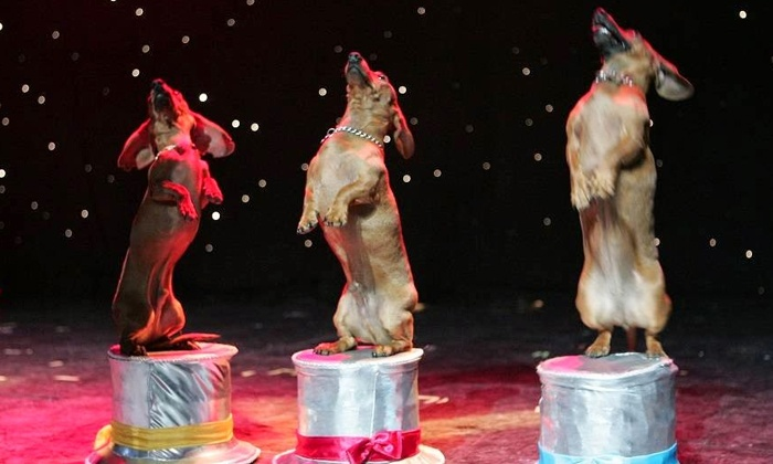 Popovich Comedy Pet Theater - V Theater: Popovich Comedy Pet Theater Circus Show for One Child, or One or Four Adults at the V Theater (Up to 70% Off)
