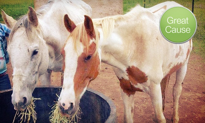 Sound Equine Options - Gresham: $10 Donation to Help Feed Horses
