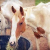 $10 Donation to Help Feed Horses