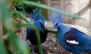 A Day Pass for One, Two, or Four People to Bird Kingdom (Up to 44% Off)