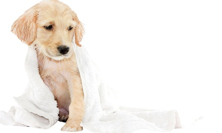 Five Self-Serve Dog Washes for a Small, Medium, or Large Dog at Puppy Suds (Up to 53% Off)
