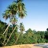 Stay at Samasati Nature Retreat in Limon, Costa Rica