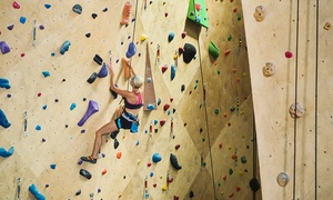 Sydney Indoor Climbing Gym : Indoor Climbing: Child ($9), Adult ($12) or Family Pass ($35) at Sydney Indoor Climbing Gym, Villawood (Up to $70 Value)