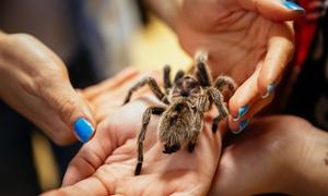 Fascynujący Świat Pająków i Skorpionów w PKiN: Od 23,99 zł: bilet dla 2, 3 lub 4 osób na wystawę Fascynujący Świat Pająków i Skorpionów w PKiN (do -44%)