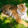 45%Off Season-Long Admission to Bowmanville Zoo