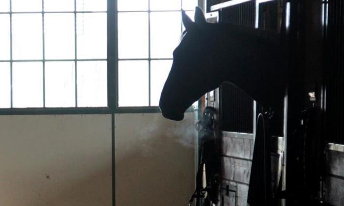 Mesa Vista Therapeutics - 1: Two Horseback-Riding Lessons for One or Two at Mesa Vista Therapeutics (Up to 56% Off)