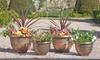 Lot Pots de fleurs décoratifs