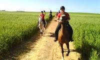 Two-Hour Horseback Scenic Trail with a Bottle of Wine for R419 for Two  at Mountain View Horse Trails (50% Off)