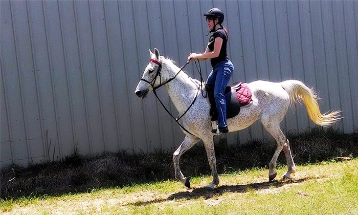 Twin Lakes Stable - Morris Chapel: Three or Five Horse-Riding Lessons at Twin Lakes Stable (Up to 62% Off)