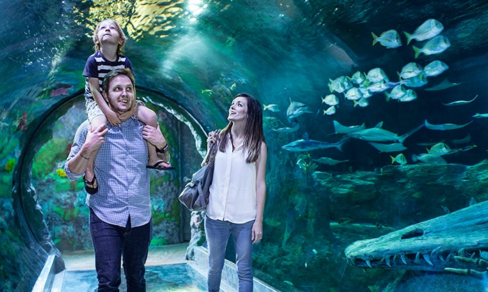 SEA LIFE Grapevine Aquarium - Grapevine Mills Mall: Admission for One Adult or One Child to SEA LIFE Grapevine Aquarium (Up to 25% Off)
