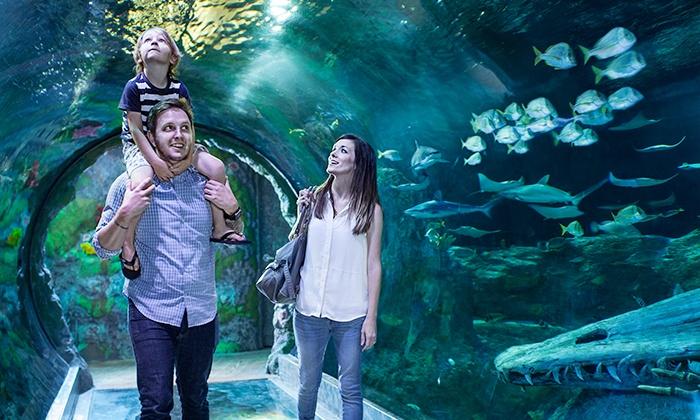 Sea Life Minnesota Aquarium - East Bloomington: Admission for One Adult or One Child at Sea Life Minnesota Aquarium (Up to 30% Off)