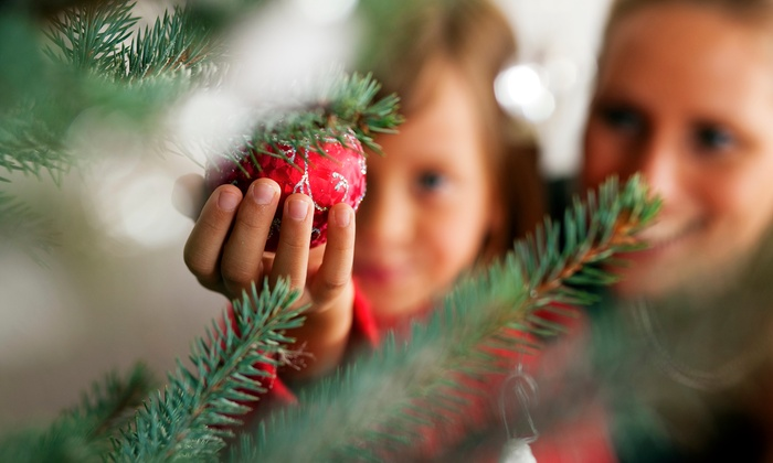 Mortimer Family Farms - Dewey-Humboldt: Christmas Tree Village Experience for One, Two, or Four at Mortimer Farms (36% Off)