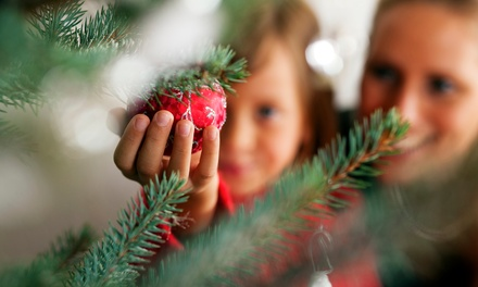 $29 for a 5- to 6-Foot Christmas Tree and Two Hot Chocolates at Thee Christmas Tree Co ($50 Value)