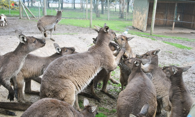 images ballarat wildlife - photo #16