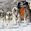 Up to 52% Off at Kiwatchi Sled Dog Rides