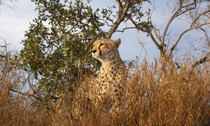 De Wildt Shingwedzi Cheetah and Wildlife Ranch: Cheetah Tour & Feeding from R268 for Two with Optional Run & Breakfast at De Wildt Shingwedzi Cheetah and Wildlife Ranch
