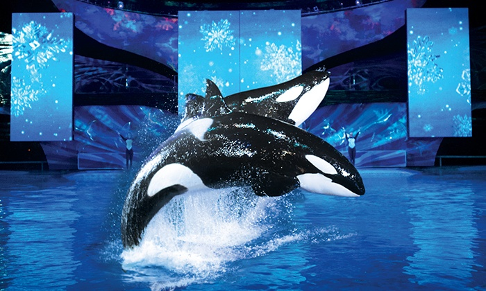 SeaWorld San Antonio - SeaWorld San Antonio: Single-Day Admission for an Adult or Child to SeaWorld San Antonio's Christmas Celebration (Up to 54% Off)