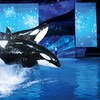 SeaWorld San Antonio – Up to 54% Off Christmas Celebration