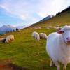Free Kids' Event: Lambing at Kline Creek Farm