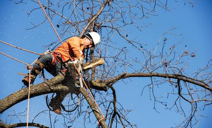 50% Off at MWM Tree Service