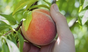 Admission For Two Or Four To Terhune Orchards Just Peachy Festival (50% Off)