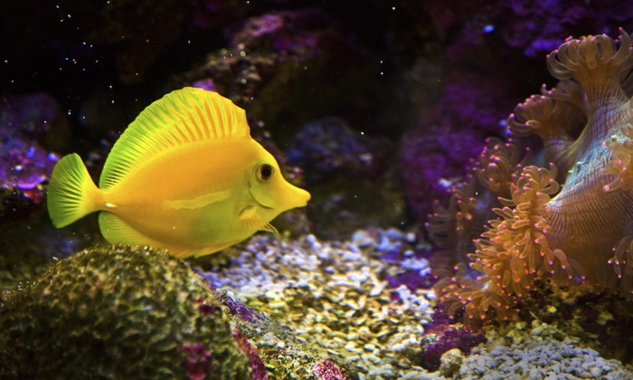 ONE FISH TWO FISH OF FL - Davie: $25 for $50 Worth of Aquariums — One fish two fish