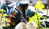 Adventures Unlimited - Ocoee: Half Day of Paintball for Two, Four, or Six with Equipment Rental at Adventures Unlimited (50% Off)
