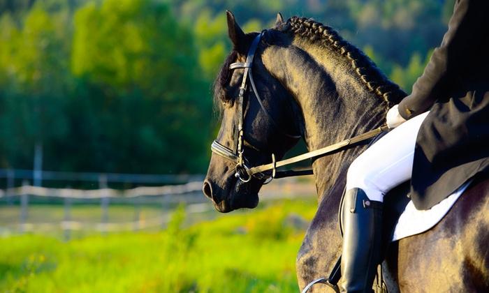 CAVALLINO DEL SUD - Cavallino del Sud: 3, 5 o 10 lezioni di equitazione o volteggio di un'ora per adulti o bambini (sconto fino a 78%)