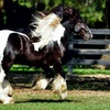Up to 39% Off Horse-Farm Walking Tour