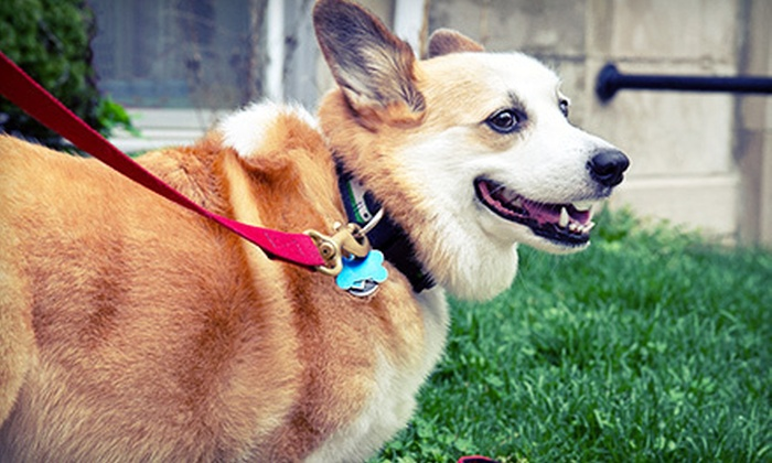 Hot Diggity! - West Austin: $30 for Three 30-Minute Dog-Walking or Pet-Sitting Sessions from Hot Diggity! ($75 Value)