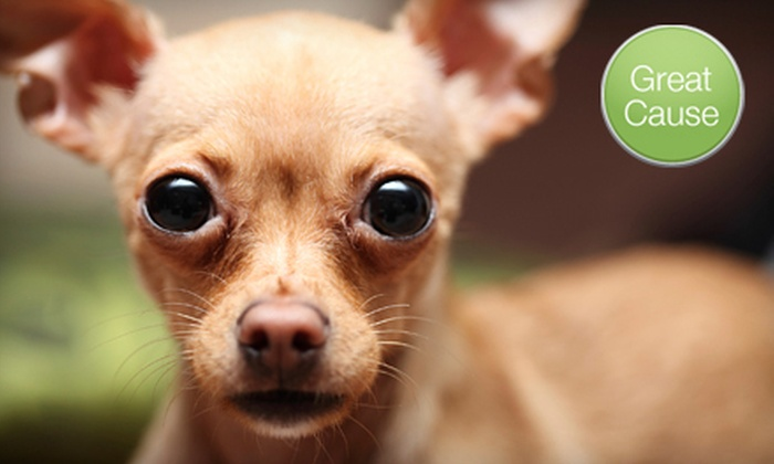 Recycled Pets Norcal - Sacramento: $10 Donation to Help Spay or Neuter Chihuahuas