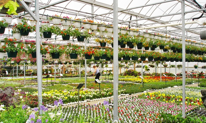 Plant Station Greenhouse Inc - Grand Chute: $22 for $40 Worth of Plants and Garden Accessories at The Plant Station Greenhouse Inc.