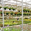 45% Off at The Plant Station Greenhouse Inc.