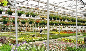 Plant Station Greenhouse Inc: $22 for $40 Worth of Plants and Garden Accessories at The Plant Station Greenhouse Inc.