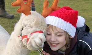 Charnwood Forest Alpacas: Christmas Trail Alpaca Walk for One Child and One Adult or a Family at Charnwood Forest Alpacas (Up to 47% Off)
