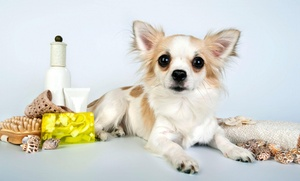Dog Town Pet Resort: $6 for $10 Worth of Pet Grooming — Dog Town Pet Resort