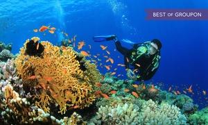 Aquarius Dive Shop: $179 for PADI Open-Water Scuba Certification with Equipment Rental at Aquarius Dive Shop ($649 Value)