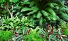 Bloom Nursery - Bloom Nursery: Plants and Flowers or Landscaping Services from Bloom Nursery (Up to 62% Off)