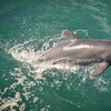 Up to 53% Off Sunset Dolphin-Watching Cruise