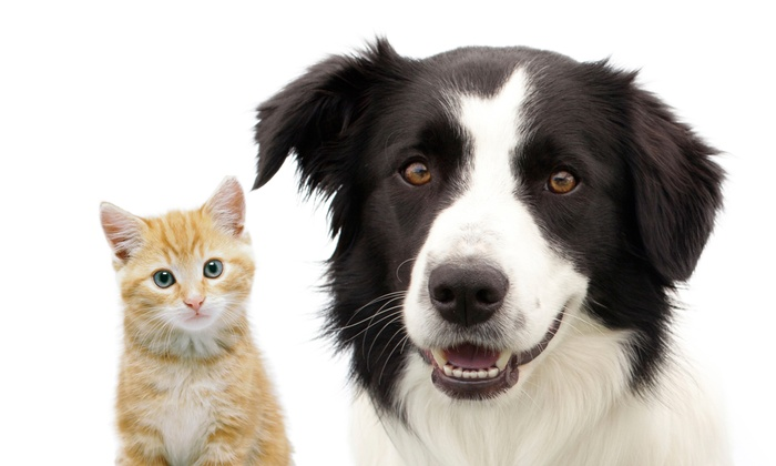 Crawford Dog & Cat Hospital - Garden City Park: Microchipping for One Cat or Dog or Two Pets at Crawford Dog & Cat Hospital (Up to 61% Off)