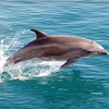 Up to 55% Off a Dolphin-Watching Cruise