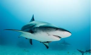 Shark Camp: $55 for $100 Worth at Shark Camp