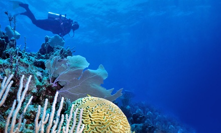 7-Night Stay with Daily Meals and Diving Package with Optional Equipment Rental at Deep Blue Resort in Honduras