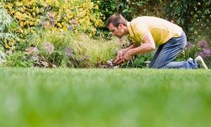 Veteran Yard Man: $96 for $175 Worth of Lawn and Garden Care — veteran yard man