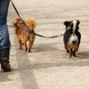55% Off Dog Walks