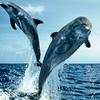 Up to 42% Off Dolphin Cruise